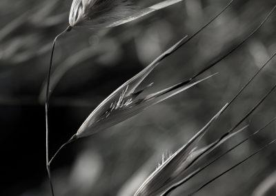 © Sabine TOULAS